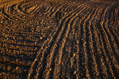 Black soil plowed field. Earth texture. Rustic background Royalty Free Stock Photography