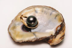 Black South Sea Pearl. The black pearl is the rarest of pearls royalty free stock photography