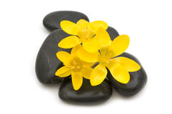 Black spa massage stones Royalty Free Stock Photo