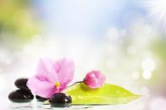 Black spa stenen en bloem op kleurrijke achtergrond Stock Afbeeldingen