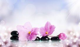 Black spa stenen en bloem op kleurrijke achtergrond Stock Fotografie