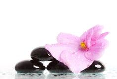 Black spa stenen en bloem op wit Royalty-vrije Stock Foto's