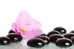 Black spa stenen en bloem op wit Royalty-vrije Stock Foto