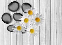 Black spa stenen en camomiles op witte houten Stock Foto
