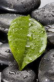 Black spa stone with water drops Stock Image