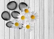 Black spa stones and camomiles on white wooden. Background Stock Photo