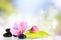 Black spa stones and flower on colorful background Stock Images