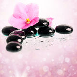 Black spa stones and flower on colorful background Royalty Free Stock Photo