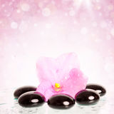 Black spa stones and flower on colorful background Stock Image