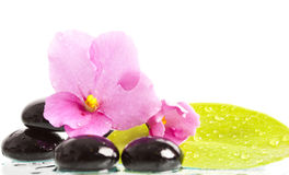 Black spa stones and flower on white Royalty Free Stock Image