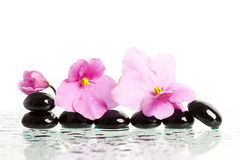 Black spa stones and flower on white Stock Photo