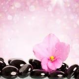 Black spa stones and flower on white Stock Photos