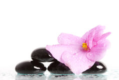 Black spa stones and flower on white Royalty Free Stock Photos