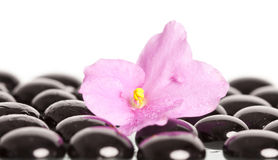 Black spa stones and flower on white Royalty Free Stock Photo