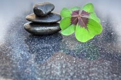 Black spa stones and four leaf clover . Black spa stones and four leaf clover  on gray background Royalty Free Stock Image