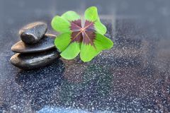 Black spa stones and four leaf clover . Black spa stones and four leaf clover  on gray background Stock Image