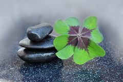 Black spa stones and four leaf clover . Black spa stones and four leaf clover  on gray background Royalty Free Stock Photography