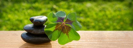 Black spa stones and four leaf clover . Black spa stones and four leaf clover  on green background Stock Photography
