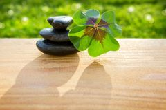 Black spa stones and four leaf clover . Black spa stones and four leaf clover  on green background Stock Image