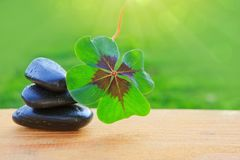 Black spa stones and four leaf clover . Spa background. Black spa stones and four leaf clover isolated on green background Royalty Free Stock Photos