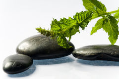 Black spa stones with leaf. Black spa stones with green leaf on white ground Stock Photo