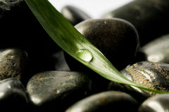 Black spa stones with leaf. Black spa stones with green leaf and a drop on it Royalty Free Stock Photo