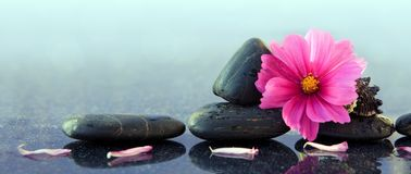 Black spa stones and pink cosmos flower. Stock Photography