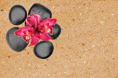 Black spa stones and pink orchid flower over yellow sand. Background Stock Image
