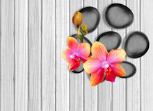 Black spa stones and pink orchid on white wooden. Background Stock Images