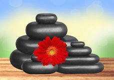 Black spa stones and red gerbera flower on wooden table over nat. Ure background Stock Photos