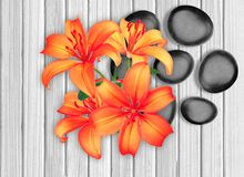 Black spa stones and red lily on white wooden. Background Royalty Free Stock Images