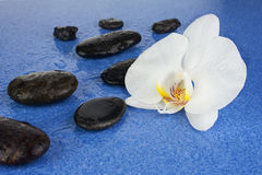 Black spa stones and white orchid flowers over blue background. Royalty Free Stock Photo