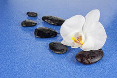 Black spa stones and white orchid flowers over blue background. Closeup Stock Images