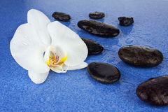 Black spa stones and white orchid flowers over blue background. Closeup Royalty Free Stock Photos