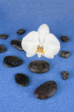 Black spa stones and white orchid flowers over blue background. Closeup Royalty Free Stock Image