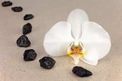 Black spa stones and white orchid flowers over nature background. Closeup Stock Images