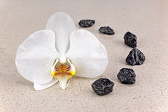 Black spa stones and white orchid flowers over nature background. Closeup Stock Photo