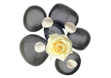 Black spa stones an white rose petals isolated on white. Black spa stones an white rose petals isolated on the white background Royalty Free Stock Photo