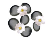Black spa stones and white spring flowers isolated on white. Background Royalty Free Stock Images