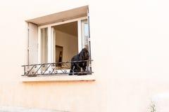 Black spaniel dog on window ledge Stock Images
