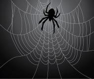 Black spider Stock Photos