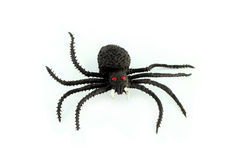 Black spider. A black spider isolate on white background Stock Images