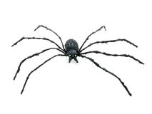 Black spider. Black toy spider isolated on a white background Stock Image