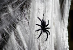 Black spider in fake web Royalty Free Stock Photo