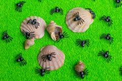 Black spider on green background. stock photo