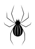 Black spider isolate Stock Photography