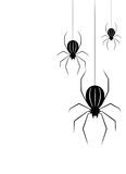 Black spider isolate Royalty Free Stock Image