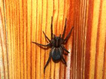 Black spider sits on a wooden surface. Arthropod. Macro mode royalty free stock photos