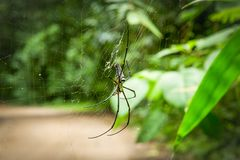 Black spider on the spiderweb. In the forest Royalty Free Stock Images