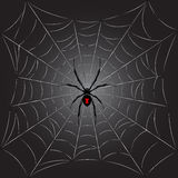 Black spider on web Stock Images